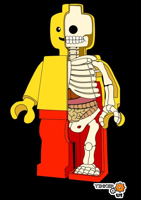 lego anatomie en couleur